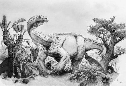 """两亿年前""""龙""""游南非"""